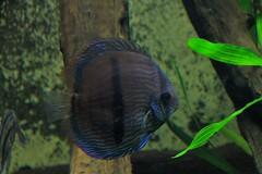 underwater diversity (Christopher DunstanBurgh) Tags: wilhelma zoo zoologischergarten stuttgart fauna animals tiere fische aquarium