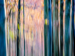 autumn walks (szélléva) Tags: icm abstract forest nature trees wood lines parallels blur painterly impressionism
