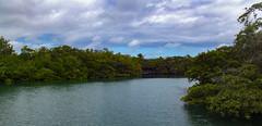 Laguna las Ninfas (dcdc887) Tags: ecuador galapagos nature naturaleza lago laguna lake lagoon water agua manglar mangrove