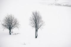 Snowy desert (donnicky) Tags: blackwhite minimalism nopeople outdoor park publicsec snow tree two viewfrombalcony whitebackground winter паркгероевпожарных d850 nature