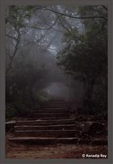 Stairway (RanadipRoy) Tags: stairs stairway steps way path park garden trees leaves fog foggy mist misty morning dawn filter nandihills bangalore karnataka india
