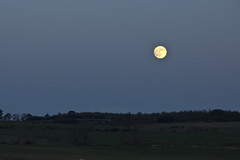 Cold Moon Rising (steve_whitmarsh) Tags: aberdeenshire scotland kintore moon sky twilight landscape topic