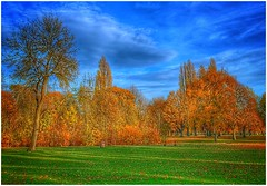 Golden (Andy Stones) Tags: autumn autumnal trees grass leaves colour colourful scenic view sky skywatching clouds cloud weather weatherwatch nature naturephotography image imageof imagecapture photography photoof centralpark scunthorpe lincolnshire northlincolnshire northlincs nlincs outdoors outside