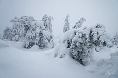 IMG_1372.jpg (niklasdd) Tags: schnee deutschland winter europa kälte germany weis snow bäume trees eis oremountains erzgebirge flickr cold saxony sachsen altenberg europe 9jähriges ice