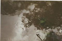 Pirajibú-Mirim (Tai Moura) Tags: fujicolor fuji expired expiredfilm filme filmexpired filmevencido vencido press800 fujipress800 iso800 brasil brazil amateur flowers peoples skate light luz rebel2000 eos300 canon canonrebel2000 2