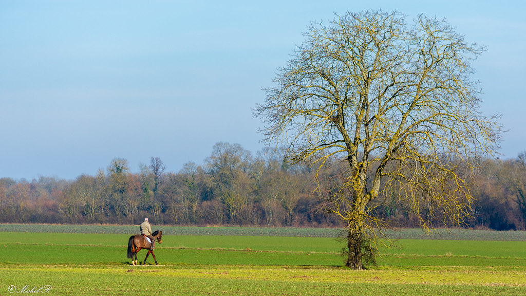The World S Best Photos Of Arbre And Bourgogne Flickr Hive