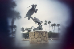 Turtle Statue in Holly Hill, Florida, pinhole image (Bcpix.com) Tags: daytonabeach fl statue sea turtle sculpture pinhole photography 35mm film ishootfilm shotonfilm color negative