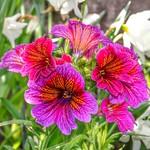 Toronto Ontario - Canada - Allan Gardens Conservatory - Toronto Tropical Garden - Landmark thumbnail