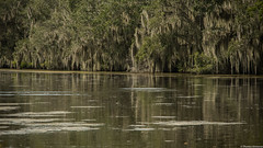 Jean Lafitte National Park, Louisiana (tomst.photography) Tags: jeanlafitte jeanlafittenationalgark nationalgeographic usa southernstates south swamp spanishmoss bayou louisiana beautyofnature adventure river crocs gator mothernature tomst
