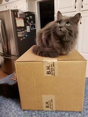 200/365/3852 (December 28, 2018) - Wanda and Cosmo Enjoying My New Camera (cseeman) Tags: box cats pets saline michigan bh bhbox cardboard boxes cardboardboxes catsonboxes camera cameraequipment 2018project365coreys yearelevenproject365coreys project365 p365cs122018 356project2018