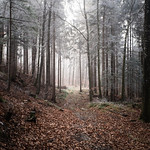 frozen forest thumbnail