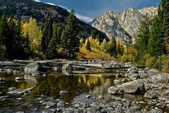 Autumn on the Creek (SWR Chantilly) Tags: grandteton nationalpark cottonwoodcreek autumn