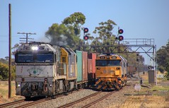 NR85 and AN9 on PM4 power past 8129 and 8135 at Lubeck loop (bukk05) Tags: greatsouthernrail southernspirit gsr signal nationalrail nr mainline vline victoria victorianrailways victorianrailway vr canon60d canon artc australia summer sg standardgauge station 2019 lubeck diesel ge freight flickr horsepower hp loco locomotive pm4 pacificnational pn photography photo trains tracks train tamron16300 tamron rp3 railpage railroad railwaystation railwaystations rail railway electromotivediesel emd engine export explore westernstandardgaugeline wimmera 81class 8129 8135 nrclass anclass an9 nr85