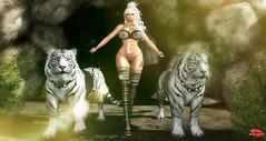 Enter the Tiger Queen (Rachel Swallows) Tags: secondlife blog lingerie bikini tiger pose xxxevent