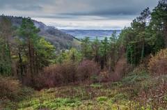Peak Hill-1-12 (Sheptonian) Tags: somerset rural scenic landscape trees fauna grassland