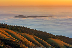 Island in the Fog Sea (Jaykhuang) Tags: eastbay livermore trivalley pleasanton dublin rollinghills lowfog sunrise jayhuangphotography spring
