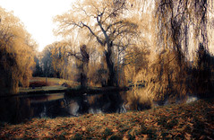 The magic park .... (Julie Greg) Tags: leedscastle nature park leafs tree trees lake water colours