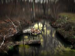 reflejos del bosque (azucena G. De Salazar) Tags: otxandio bizkaia basquecountry basoa paisvasco euskadi euskalherria hayedfo