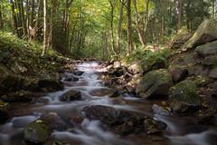 Urselbach im Herbst (markusgeisse) Tags: bach wasser felsen herbst bäume taunus