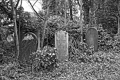 General Cemetery  Monochrome (brianarchie65) Tags: generalcemetery cemeteries graves grave hull trees ivy bushes canoneos600d geotagged brianarchie65 headstones brokenheadstones kingstonuponhull eastyorkshire springbankwest unlimitedphotos ngc inexplore blackandwhite blackandwhitephotos blackandwhitephoto blackandwhitephotography blackwhite123 blackwhiterealms flickrunofficial flickr flickrcentral flickruk flickrinternational ukflickr