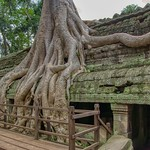 Tree roots overgrowing Ta Prohm (a.k.a. jungle temple) temple ruins in Angkor Archeological Park near Siem Reap, Cambodia thumbnail