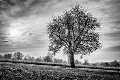 When Time goes by... (Ody on the mount) Tags: abendlicht anlässe bäume em5ii himmel mzuiko2518 omd olympus pflanzen schwäbischealb solitär sonnenuntergang wanderung wolken bw monochrome sw sunset trees