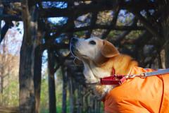 Dustin (cisc1970) Tags: sonyilce6300 sony sonya6300 brooklyn nyc badassbrooklynanimalrescue badassbk dog perro prospectpark
