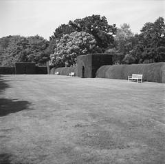 Yew tree hedges, Somerleyton (nikolaijan) Tags: fuji neopan film 120 somerleyton blackandwhite yashica 124g 6x6 england norfolk iso400 yew