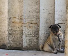 waiting (ant 52) Tags: nikon d5100 dog animal