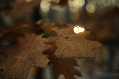 autumn nature (Vadim Beldiy) Tags: nikond600 naturebynikon nature elitephotography elitephotographers photography photographer manualfocus manuallens ussrlens bokeh 50mm f2 helios81n helios81h helios81 мсгелиос81н гелиос81н гелиос81 foliage sunset sun daylight leaf leaves vadimbeldy vadimbeldiy ва бельдийвадим forest oakforest oak asbeautifulasyouwant вадимбельдий