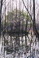 Warlock (Jetcraftsofa) Tags: nikonf4 micronikkor5528 vista200 35mm slr filmphotography thewitch warlock witchcraft sorcerer wet land marsh magic nature swamp