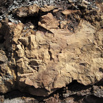 Paleopedogenically-altered dolostone (Mill Knob Member, Slade Formation, Upper Mississippian; Clack Mountain Road Outcrop, south of Morehead, Kentucky, USA) thumbnail