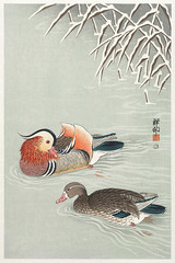 Mandarin ducks (1925 - 1936) by Ohara Koson (1877-1945). Original from The Rijksmuseum. Digitally enhanced by rawpixel. (Free Public Domain Illustrations by rawpixel) Tags: pdproject21batch2x otherkeywords tagcc0 animal antique art asian bird drawing ducks illustration japan japanese koson mandarinducks museum name ohara oharakoson old paint rijksmuseum vintage