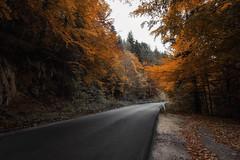 _DSC3911c (Apostol Dragiev) Tags: rodopimountain rodopi autumn autumnleaves road mountain