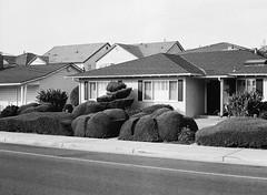 San Jose (bior) Tags: fujifilmga645zi ga645zi 6x45cm sanjose mediumformat 120 trix kodak lawn yard frontyard house home hedge bush