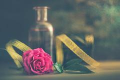 The gold ribbon (Ro Cafe) Tags: extensiontubes helios58mmf2 rose stilllife arrangement beutiful closeup romantic setup flower bloom bottle ribbon box golden bokeh nikond600