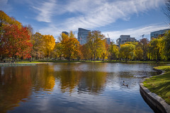 C1009845 (sswee38823) Tags: summaron summaronm15628 leicasummaronm15628 28mm 28 fallcolors leaves fall 2018 cityscape water lagoon reflection reflections bostonpublicgardens bostonpublicgarden boston bostonma ma massachusetts newengland city leica leicam leicacamera m10 leicam10 leicacameraagleicam10 photography photograph photo seansweeney seansweeneyphotographer autumn