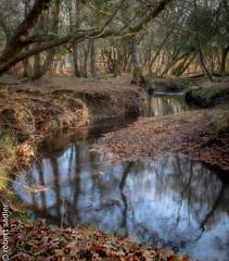 New Forest - Bratley Water-1.jpg (Robert M Sadler) Tags: 24105lf4 dorset landscape trees newforest buildingslandscape photoshopped canon autumn eos m5 eosm5 24105f4l