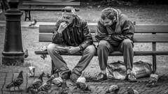 two men feed pigeons in Gdansk Poland 31/8 2007. (photoola) Tags: gdansk street bänk sv monochrome blackandwhite photoola bench birds