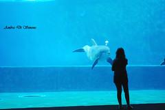 ligamen (ambcroft) Tags: animals animali dolphin delfino aquarium acquario acquariodigenova genova memories ricordi me italy italia nikon nikond3000
