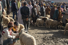 Cattle Market, Imilchil, Morocco (Mirko'92) Tags: sheeps market berber imilchil summer morocco city rural life cattle