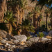 Palm Canyon, California