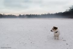 Rizzo (Simona Bari) Tags: 2019 elementinaturali neve snow winter parcodimonza monza brianza inverno d610 nikon rizzo dog