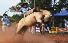 Andrei Soares e Maleva (Eduardo Amorim) Tags: gaúcho gaúchos gaucho gauchos cavalos caballos horses chevaux cavalli pferde caballo horse cheval cavallo pferd pampa campanha fronteira quaraí riograndedosul brésil brasil sudamérica südamerika suramérica américadosul southamerica amériquedusud americameridionale américadelsur americadelsud cavalo 馬 حصان 马 лошадь ঘোড়া 말 סוס ม้า häst hest hevonen άλογο brazil eduardoamorim gineteada jineteada