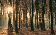 Autumn Light (Guido de Kleijn) Tags: speulderbos veluwe bos forest gelderland geulders guidodekleijn nikond500 nikon1680f28 netherlands sunrise