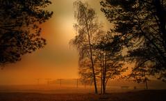 Beach. (augustynbatko) Tags: beach autumn lake nature trees fog mist