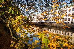 Streets of Gothenburg (Maria Eklind) Tags: garden autumn gothenburg göteborg trädgårdsföreningen spegling sweden reflection flower höst city västragötalandslän sverige se