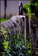 Lavenay (Sarthe) (gondardphilippe) Tags: lavenay sarthe maine paysdelaloire architecture campagne couleurs colors door extérieur graphique green garden loir leloir monochrome mur nature outdoor ombre porte quiet rural texture vert zen