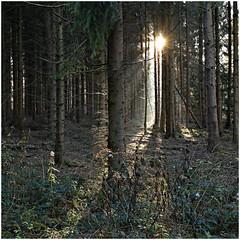 eschweiler stadtwald 74 (beauty of all things) Tags: eschweiler stadtwald forest wald autumn herbst intothelight quadratisch