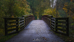 Bridge in Autumn (Wits End Photography) Tags: autumn infrastructure building bridge season nature outdoor fall structure trees plant tree forest colors plants architecture foliage woods leaves places landscape country exterior leaf natural outside picturesque rural scenic vegetation view